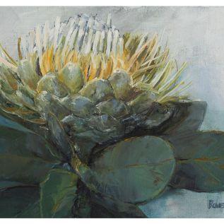 Protea Aborea Waboom