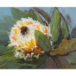 Protea Barbigera Meisner